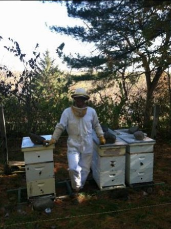 beekeeping photo 2
